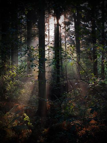 light mist fuji fujifilm rays warwickshire atherstone parkhillwood fujix10