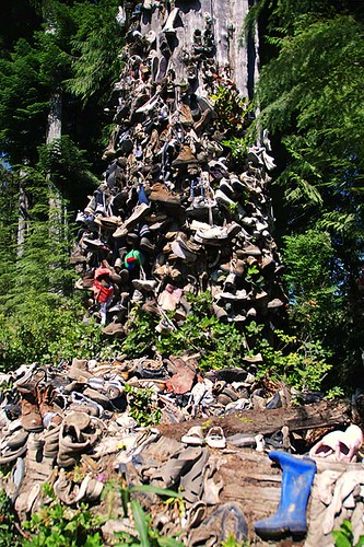 Shoe Tree near Port Hardy, North Vancouver Island, British Columbia, Canada