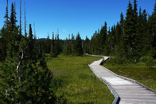 Paradise Meadows Boardwalk, Strathcona Provincial Park, Central Vancouver Island, British Columbia, Canada