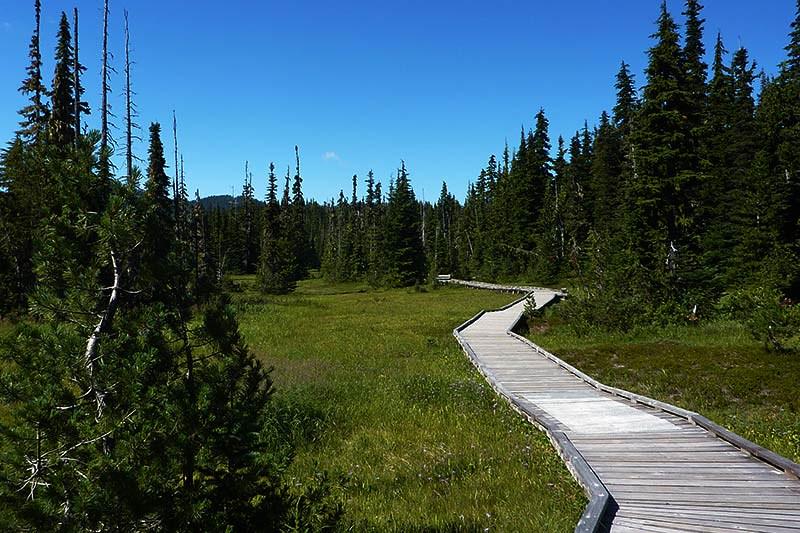 Paradise Meadows Boardwalk, Strathcona Provincial Park, Central Vancouver Island, British Columbia, Canada