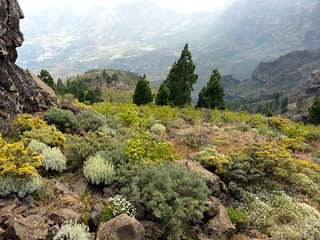 Gran Canaria - Pozo de las Nieves in the Spring | by elsua
