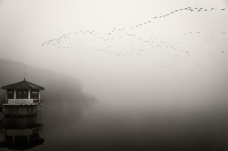 DMZ Bird Sanctuary - Cheorwon, South Korea