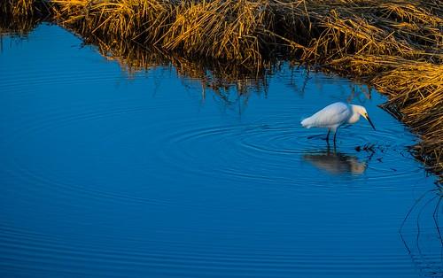 silversandswalnutbeachsunriseegretrocksbarnacles wetland wetlands marsh marshland connecticut ct newengland silversandspark park beach milfordct milfordbeach landscape silversands