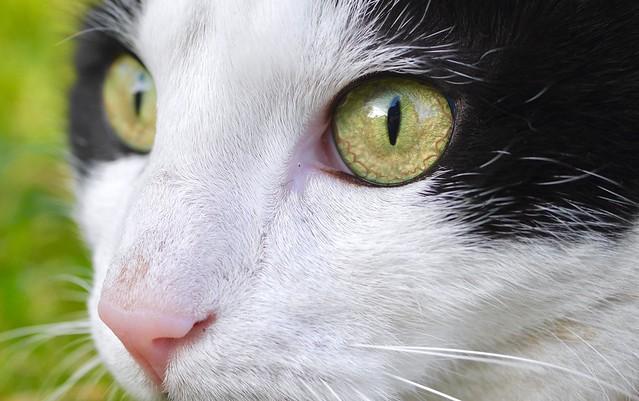 🐱 Moustic Eyes - Cat 🐱