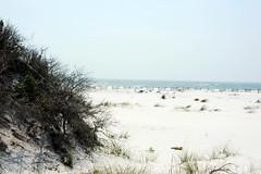 Bon Secour Wildlife Refuge - Pine Beach Trail | by cmpalmer