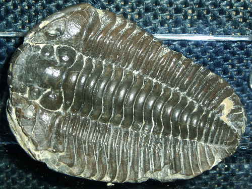 Trilobite | by Lukas Large