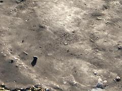 ground detail