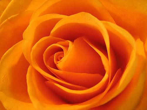 orange! by mimbrava