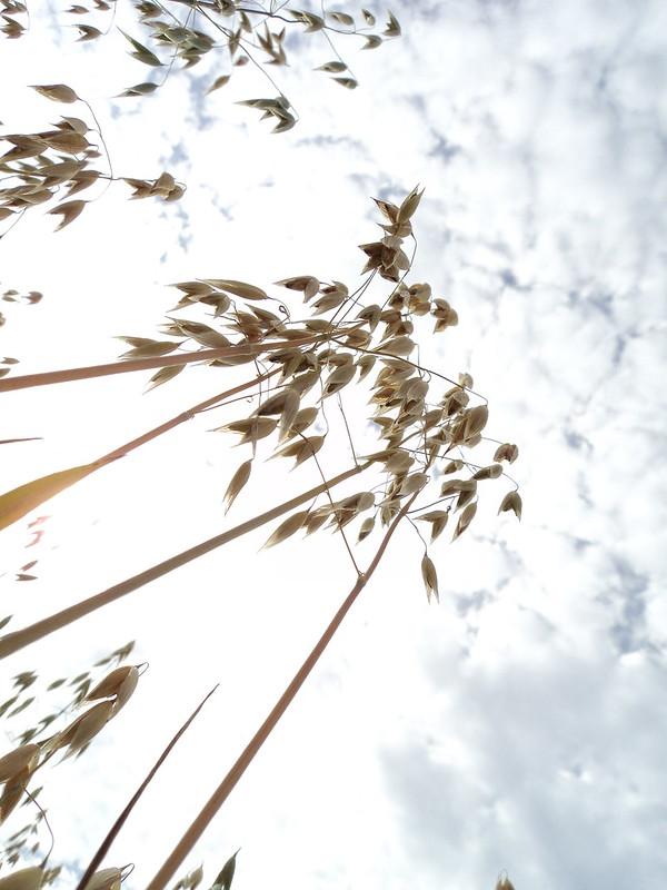 Mental sky oats
