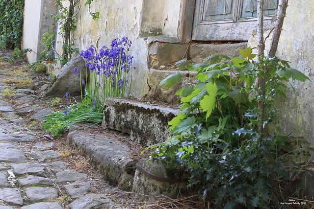 L'escalier (2)