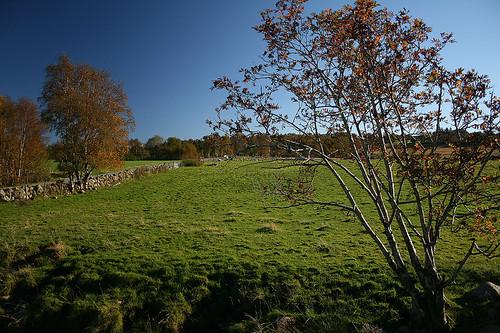 landscapes_3_20130312_2009657416