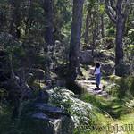 06 Viajefilos en Australia. Cathedral Rock NP 05