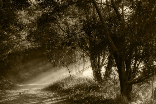 blackandwhite bw sun monochrome landscape sunrays raysofsun morningsun oxleycreekcommon