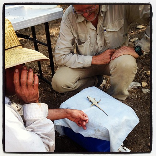 How to put a lizard to sleep: tummy rubs. #mexico #sonora #biodiversity #skyislandalliance | by Exploring Overland (ConserVentures)