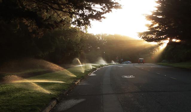 sprinklers and sun rays, morning.  Golden Gate Park, San Francisco (2013)