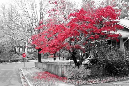 Fall Colors | by Jordan Barab