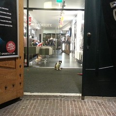 Sportcity Kitty #Leiden