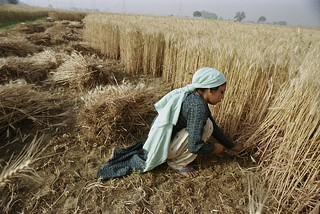 Harvesting crops | by World Bank Photo Collection