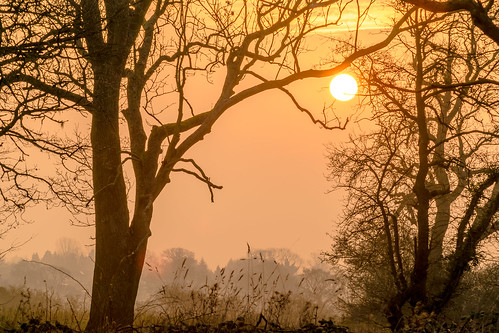 sunrise countryside tree trees mist landscape