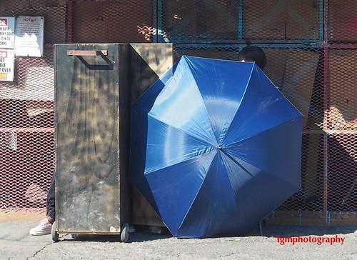 Peek-a-Blue | by Halcon122