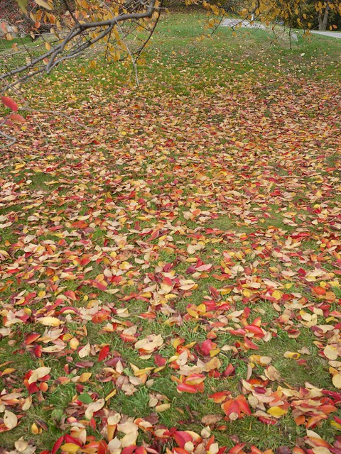 日, 2013-11-03 13:32 - Bronx Botanical Gardenの紅葉