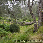 02 Viajefilos en Australia. Barrington NP 19