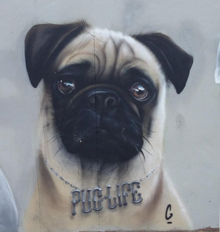 Graffiti at Bondi Beach