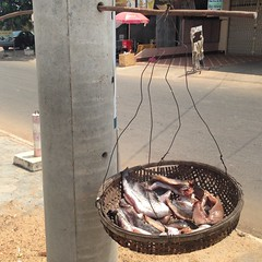 Kampong Cham, Cambodia. 72