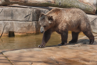 20140525-milwaukee-zoo-6.jpg