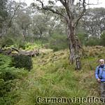 02 Viajefilos en Australia. Barrington NP 20