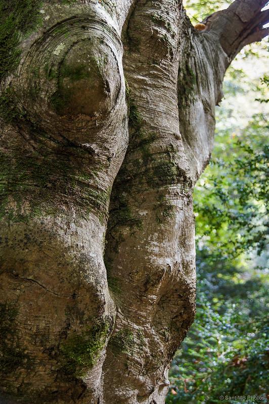 Piel de árbol