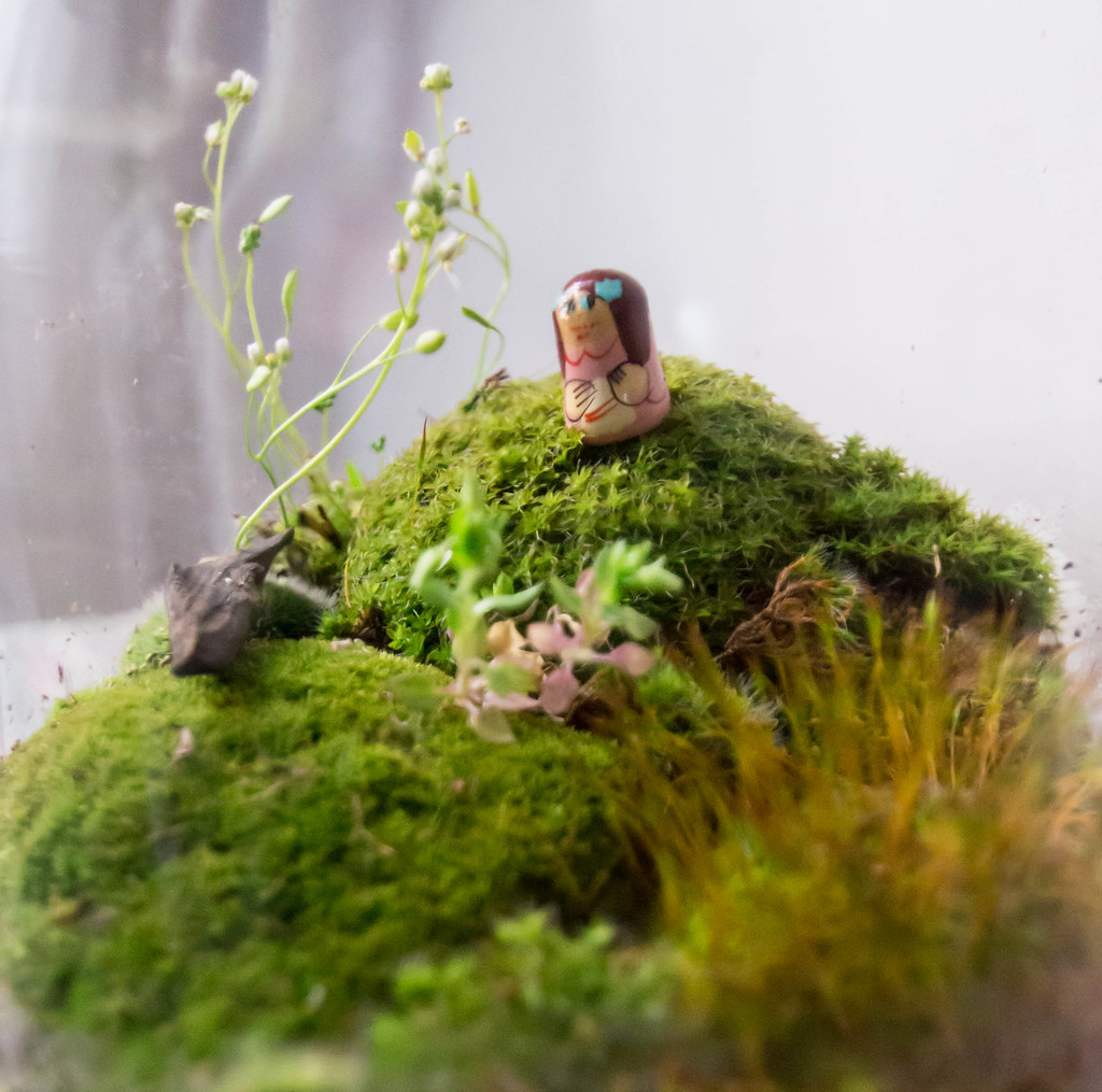 Add Moss To The Terrarium To Maintain Humidity For Crested Gecko Terrarium