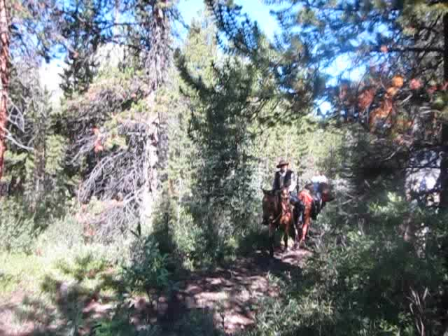 0165 Guided backcountry tour on horseback on the Forty Mile Creek Trail