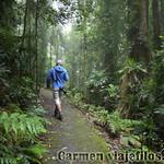 07 Viajefilos en Australia. Dorrigo Rainforest NP 13