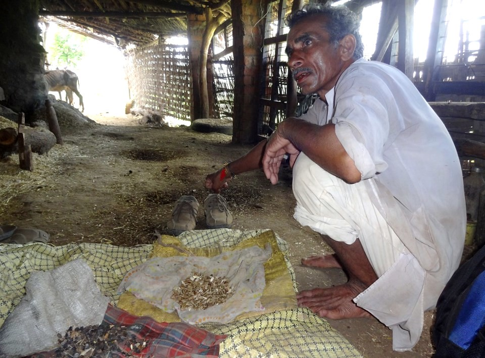 Omchand Mahatule showing his farm saved seeds.