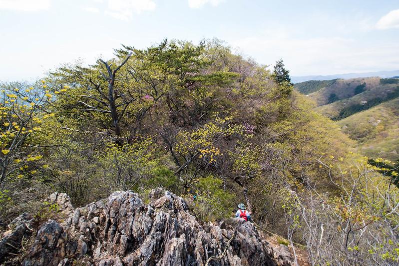 鳴神山 アカヤシオ