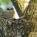 Great Horned Owl by rich0234