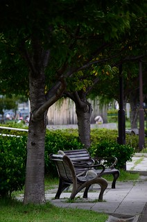 Bench   by tsu55