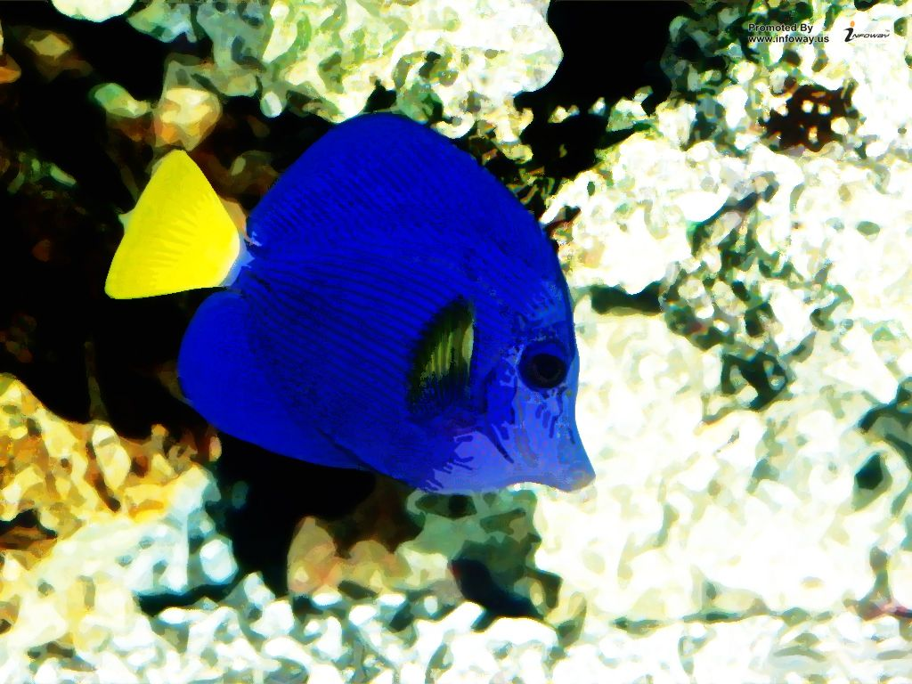 Saltwater Tropical Fish Wallpaper Saltwater Tropical Fish Flickr