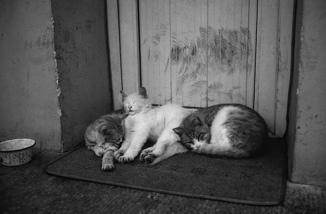 STRAY CATS, BEIJING, CHINA