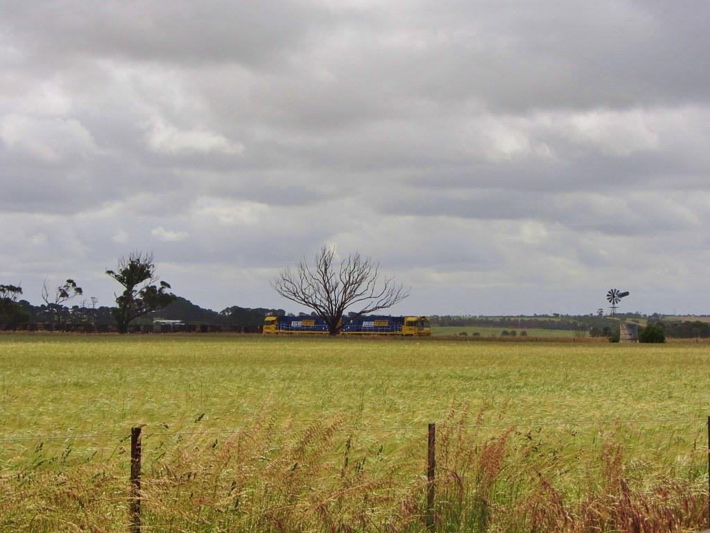Windy paddock near Inverleigh, Vic. (Australia) by Adam Serena