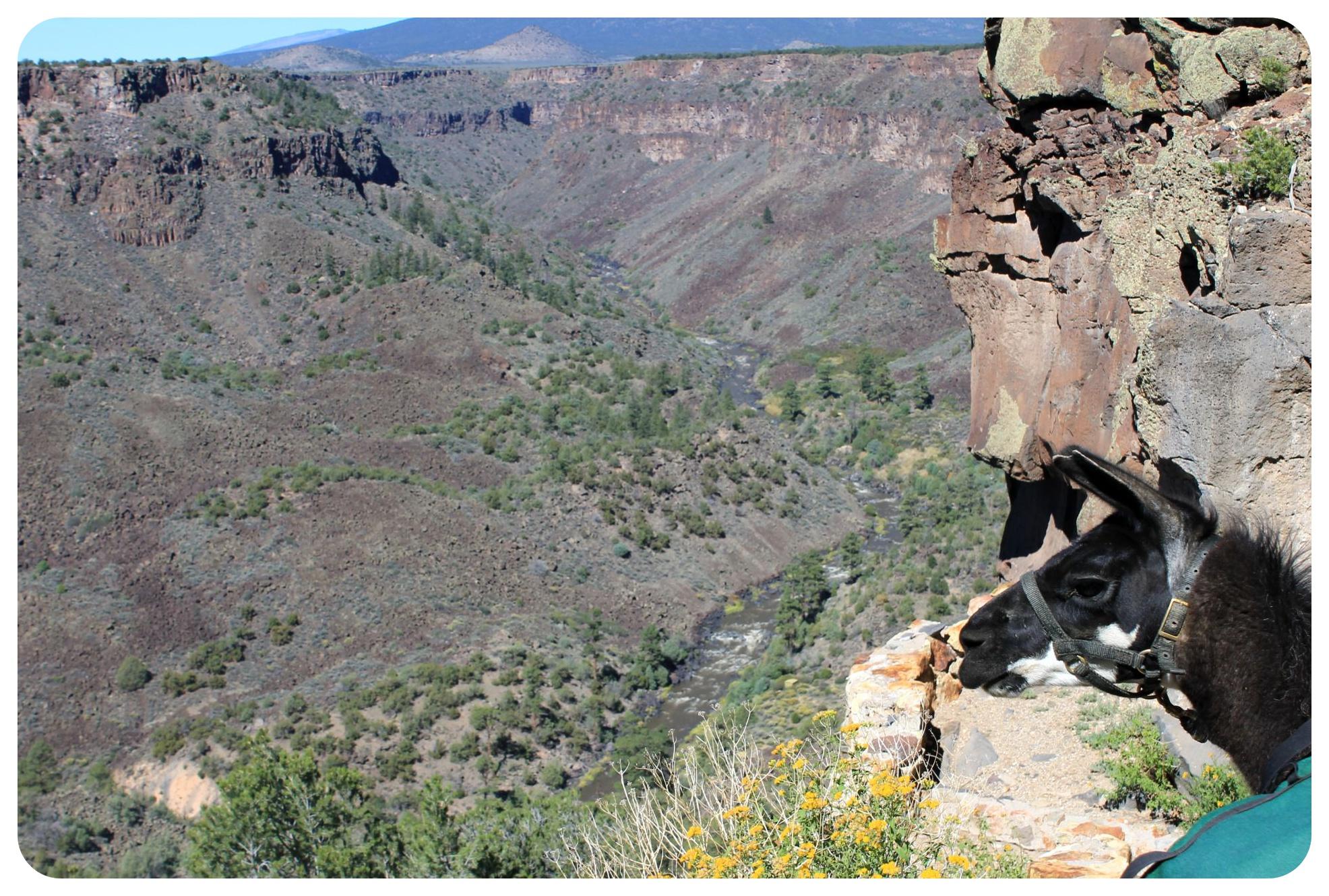 llama and rio grande gorge
