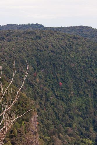 heritage nature ecology landscape rainforest australia nsw aus unescoworldheritage worldheritage canonef70200mmf4lisusm borderrangesnationalpark canonef14xiiextender canon40d borderrangesnp