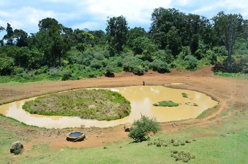 mountain kenya lodge serena waterhole nyeri