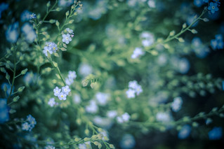 Space flowers - 30/365 | by moonstream