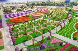 Dubai Miracle Garden   by Srilathablog