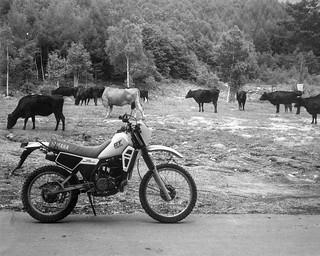 YAMAHA DT125 (1982)   by 1zumi 0KAN0