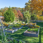Garden at Avalon in the fall
