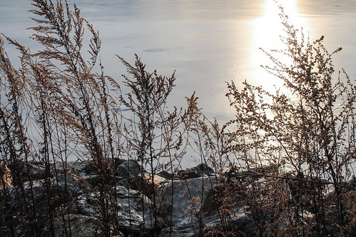 winter sunset sun sunlight ice nature silhouette pond rocks glow shimmery silhouettes icy stumppond icywater winterscenery winterreflections smithfieldrhodeisland icypond