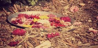 Palangana con flores